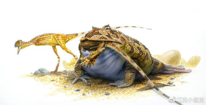 Beelzebufo - Loài ếch quỷ khổng lồ có thể nuốt chửng cả khủng long - Ảnh 6.