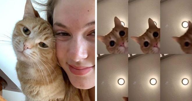 Chú mèo gây sốt mạng xã hội vì sự siêu đáng yêu của mình trên Tik Tok - Ảnh 1.