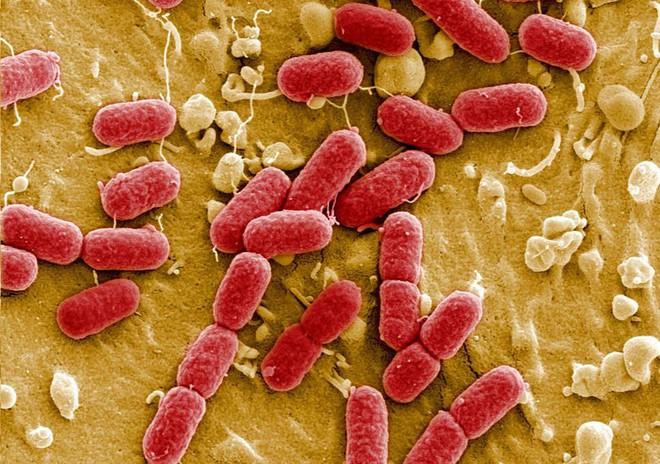 Khoa học đang nghiên cứu lịch sử kháng kháng sinh của vi khuẩn trong hàng triệu năm, trước cả khi khủng long xuất hiện - Ảnh 3.