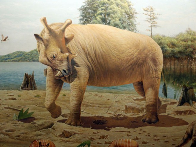 Có thể bạn chưa biết, tổ tiên của voi và tê giác cổ đại có vẻ ngoài quái dị hơn ngày nay nhiều! - Ảnh 6.