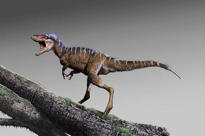 Bất ngờ phát hiện tổ tiên của khủng long bạo chúa chỉ có kích thước nhỉnh hơn một con chó - Ảnh 3.