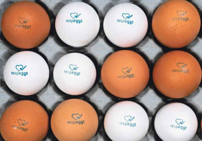 Mỗi năm, 7 tỷ con gà trống con sẽ bị giết ngay khi vừa mới nở: Công nghệ trứng nhân đạo này sẽ thay đổi điều đó - Ảnh 1.