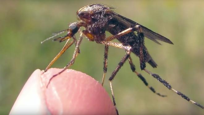 Bé nhỏ là thế, tại sao muỗi có thể đe dọa mạng sống của một nửa dân số thế giới? - Ảnh 2.