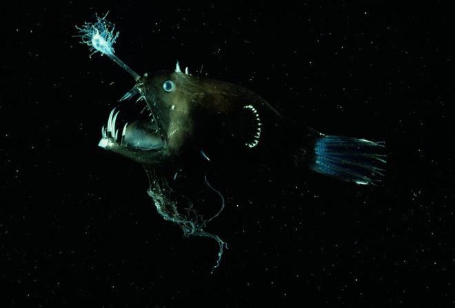 Cá lồng đèn: tên dễ thương nhưng mặt thì khì không thương nổi và có những hành vi đáng sợ nhất đại dương - Ảnh 3.