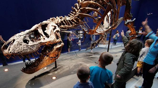 Khủng long bạo chúa T-Rex đã tích hợp máy điều hòa không khí trong hộp sọ - Ảnh 2.