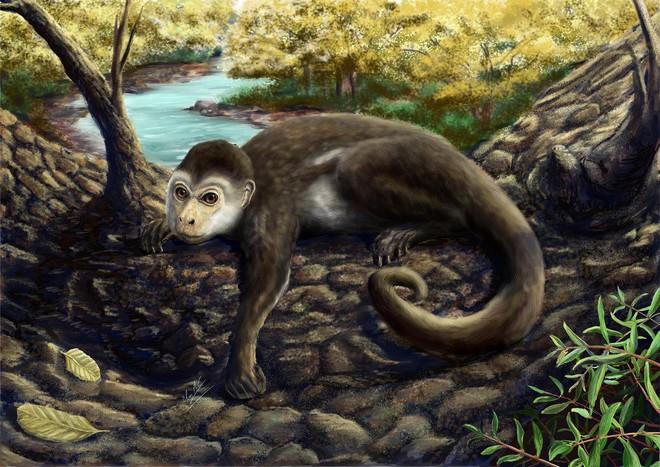 Hộp sọ kì lạ của loài khỉ cổ đại tiết lộ bí mật về cách thức bộ não của các loài linh trưởng phát triển - Ảnh 3.
