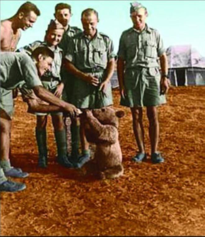 Huyền thoại hạ sĩ gấu: Uống bia hút thuốc như người, tham gia tải đạn trong Thế chiến II - Ảnh 1.