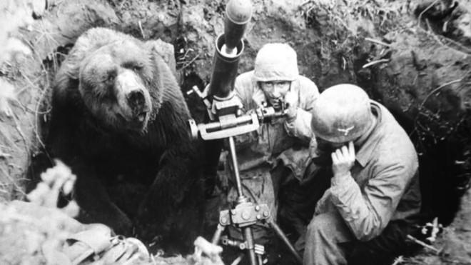 Huyền thoại hạ sĩ gấu: Uống bia hút thuốc như người, tham gia tải đạn trong Thế chiến II - Ảnh 3.