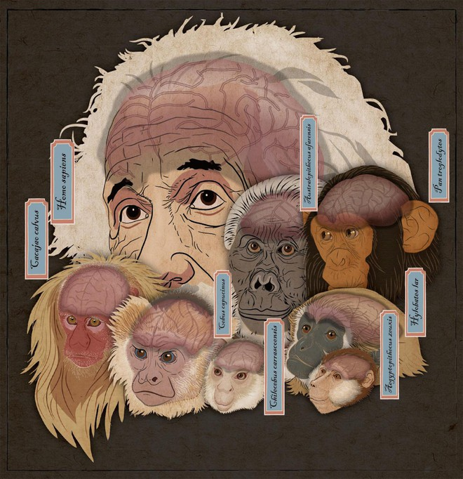 Hộp sọ kì lạ của loài khỉ cổ đại tiết lộ bí mật về cách thức bộ não của các loài linh trưởng phát triển - Ảnh 2.