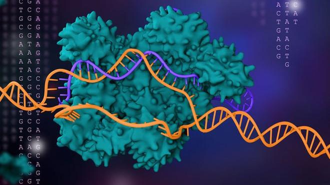Đột phá mới: CRISPR bây giờ đã có thể chỉnh sửa cả nhiễm sắc thể, chứa hàng triệu ký tự di truyền một lúc - Ảnh 1.