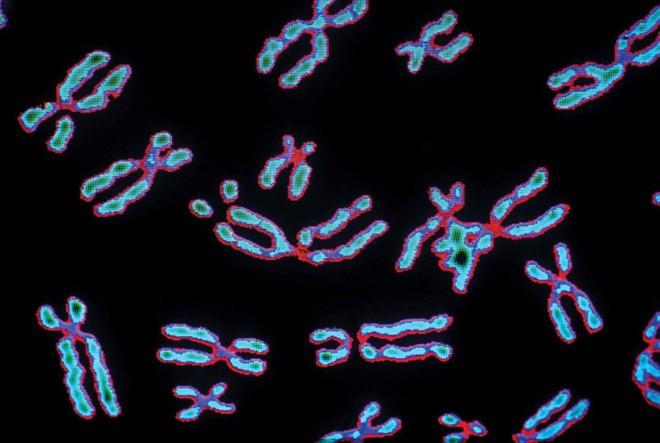 Đột phá mới: CRISPR bây giờ đã có thể chỉnh sửa cả nhiễm sắc thể, chứa hàng triệu ký tự di truyền một lúc - Ảnh 2.
