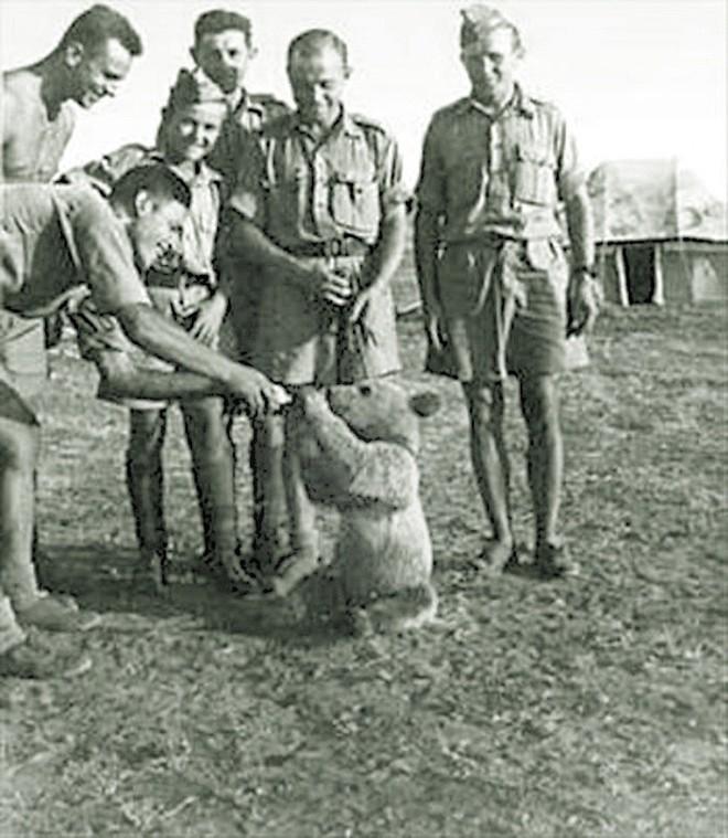 Wojtek: Chú gấu nghiện bia được lấy làm biểu tượng trên huy hiệu của lực lượng pháo binh Ba Lan - Ảnh 2.