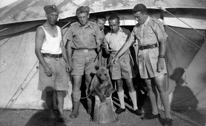 Wojtek: Chú gấu nghiện bia được lấy làm biểu tượng trên huy hiệu của lực lượng pháo binh Ba Lan - Ảnh 1.