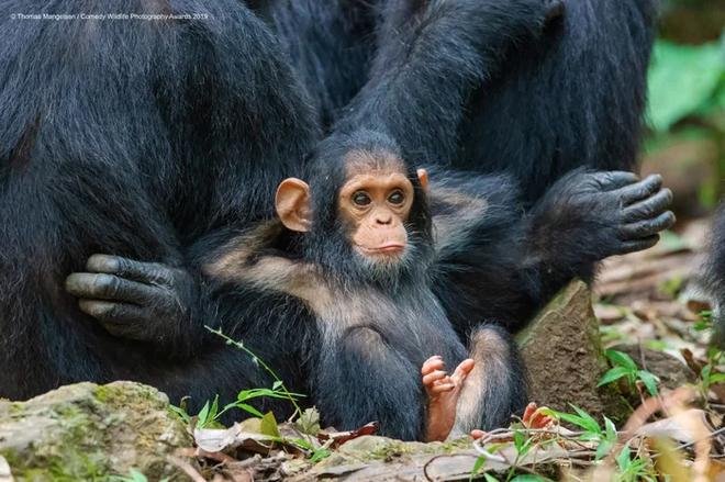 Những bức ảnh siêu hài hước trong chung kết cuộc thi nhiếp ảnh động vật hoang dã Comedy - Ảnh 15.
