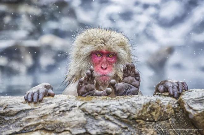Những bức ảnh siêu hài hước trong chung kết cuộc thi nhiếp ảnh động vật hoang dã Comedy - Ảnh 16.