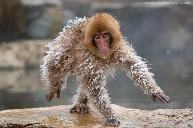 Những bức ảnh siêu hài hước trong chung kết cuộc thi nhiếp ảnh động vật hoang dã Comedy - Ảnh 20.