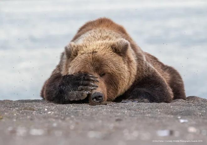 Những bức ảnh siêu hài hước trong chung kết cuộc thi nhiếp ảnh động vật hoang dã Comedy - Ảnh 9.
