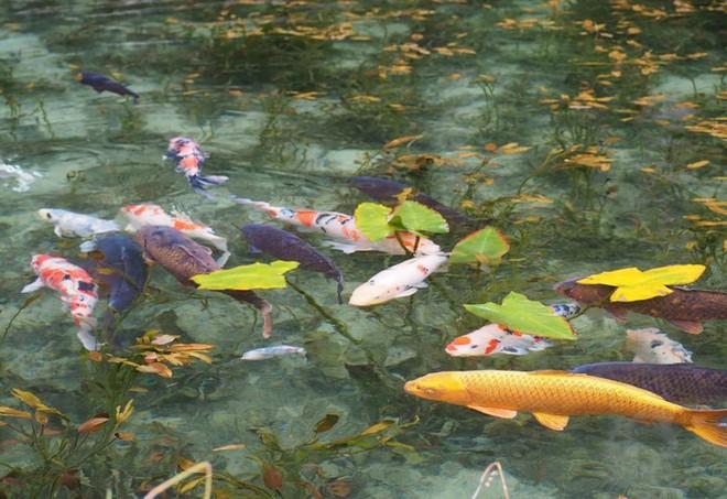 Nếu đến Nhật Bản, đừng quên ghé thăm hồ nước trong vắt, đẹp như bức tranh thủy mặc này - Ảnh 5.