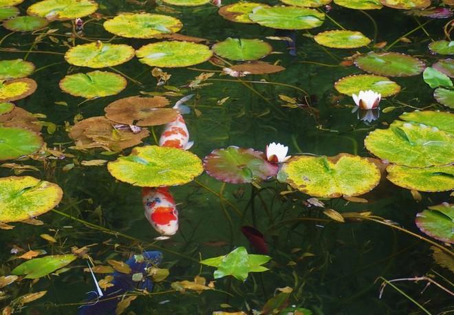 Nếu đến Nhật Bản, đừng quên ghé thăm hồ nước trong vắt, đẹp như bức tranh thủy mặc này - Ảnh 2.