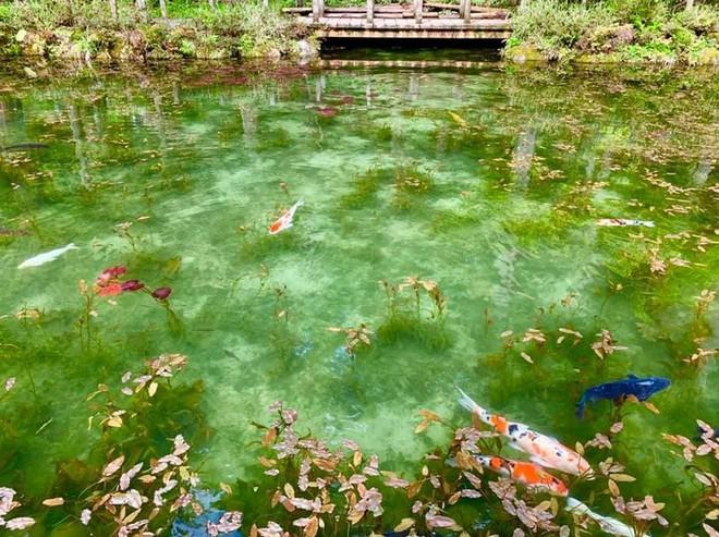 Nếu đến Nhật Bản, đừng quên ghé thăm hồ nước trong vắt, đẹp như bức tranh thủy mặc này - Ảnh 8.