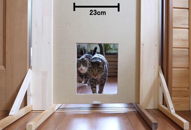 YouTuber Nhật Bản bày trò lách qua khe cửa hẹp cho 2 boss mèo để xem chúng có phải một loại chất lỏng hay không - Ảnh 5.