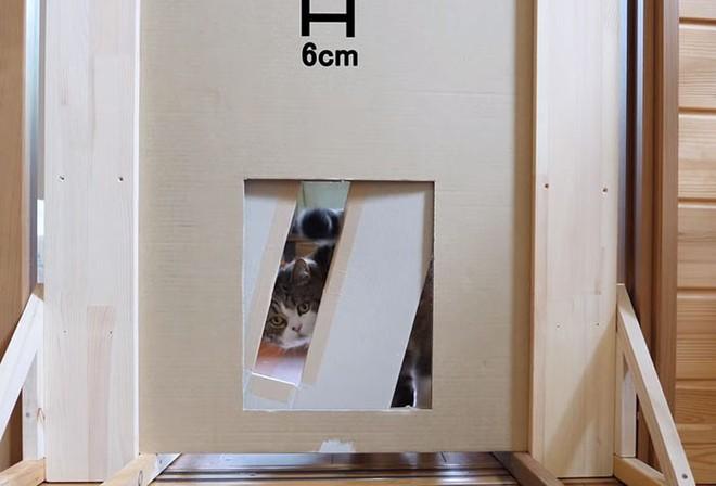 YouTuber Nhật Bản bày trò lách qua khe cửa hẹp cho 2 boss mèo để xem chúng có phải một loại chất lỏng hay không - Ảnh 14.