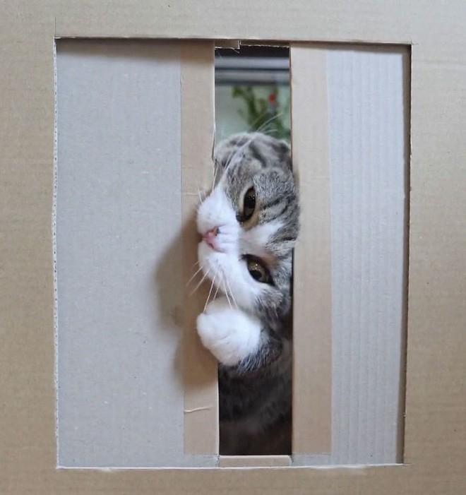 YouTuber Nhật Bản bày trò lách qua khe cửa hẹp cho 2 boss mèo để xem chúng có phải một loại chất lỏng hay không - Ảnh 16.