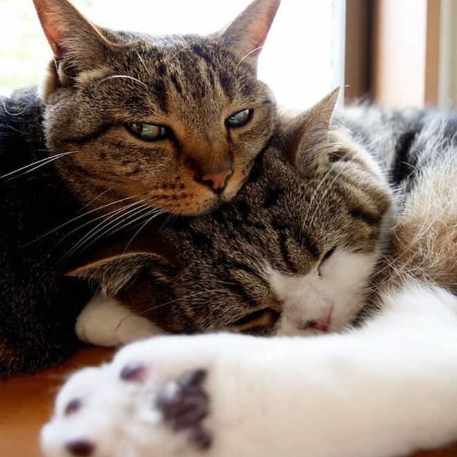 YouTuber Nhật Bản bày trò lách qua khe cửa hẹp cho 2 boss mèo để xem chúng có phải một loại chất lỏng hay không - Ảnh 3.
