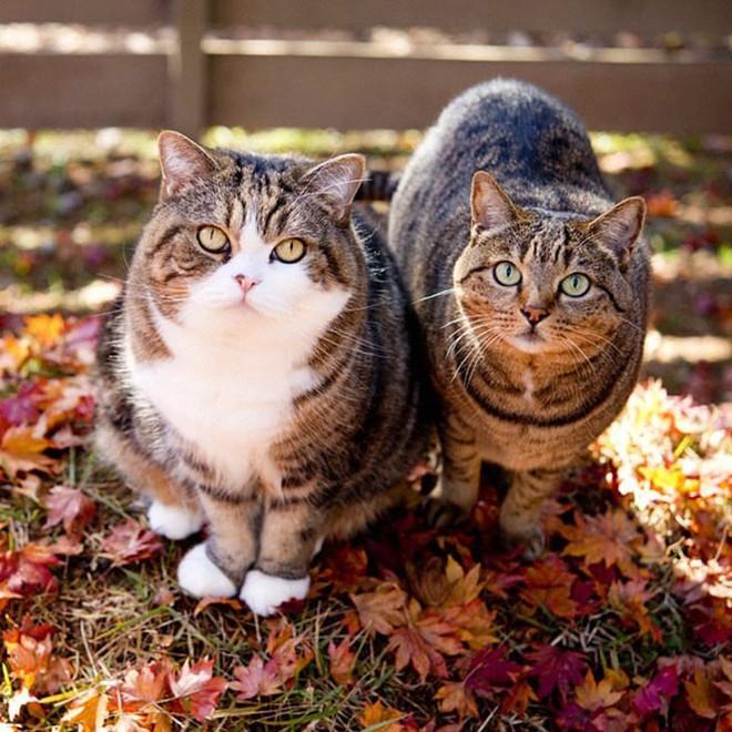 YouTuber Nhật Bản bày trò lách qua khe cửa hẹp cho 2 boss mèo để xem chúng có phải một loại chất lỏng hay không - Ảnh 2.