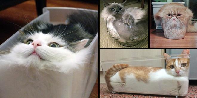 YouTuber Nhật Bản bày trò lách qua khe cửa hẹp cho 2 boss mèo để xem chúng có phải một loại chất lỏng hay không - Ảnh 1.