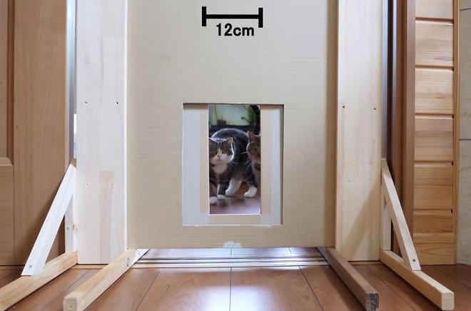 YouTuber Nhật Bản bày trò lách qua khe cửa hẹp cho 2 boss mèo để xem chúng có phải một loại chất lỏng hay không - Ảnh 6.