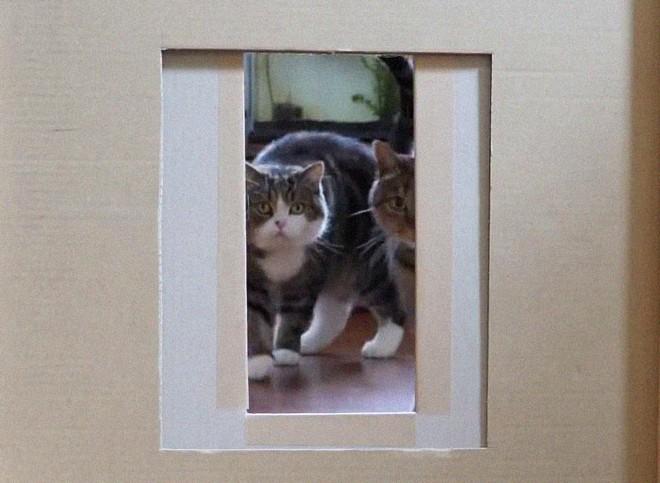 YouTuber Nhật Bản bày trò lách qua khe cửa hẹp cho 2 boss mèo để xem chúng có phải một loại chất lỏng hay không - Ảnh 7.