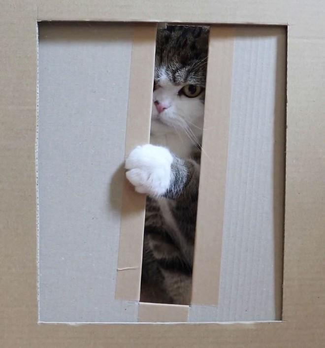 YouTuber Nhật Bản bày trò lách qua khe cửa hẹp cho 2 boss mèo để xem chúng có phải một loại chất lỏng hay không - Ảnh 9.