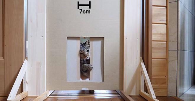 YouTuber Nhật Bản bày trò lách qua khe cửa hẹp cho 2 boss mèo để xem chúng có phải một loại chất lỏng hay không - Ảnh 10.