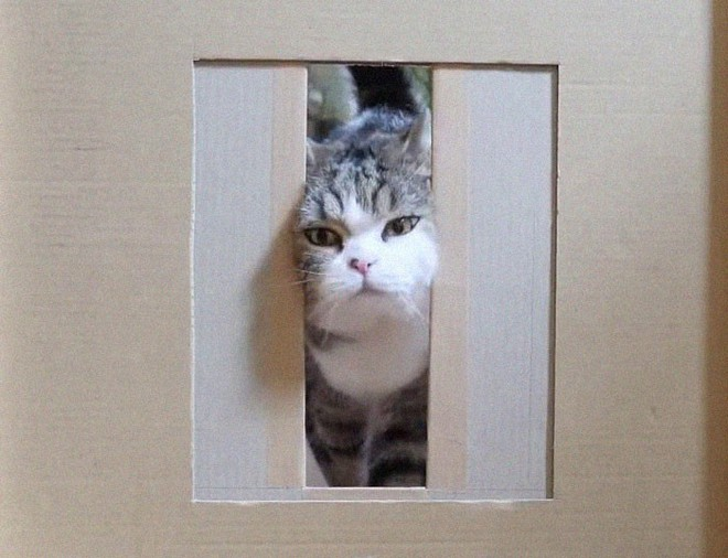 YouTuber Nhật Bản bày trò lách qua khe cửa hẹp cho 2 boss mèo để xem chúng có phải một loại chất lỏng hay không - Ảnh 12.