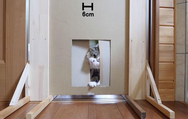 YouTuber Nhật Bản bày trò lách qua khe cửa hẹp cho 2 boss mèo để xem chúng có phải một loại chất lỏng hay không - Ảnh 13.