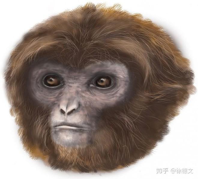 Nếu loài người bị diệt vong, liệu tinh tinh có tiếp tục tiến hóa để trở thành loài người hay không? - Ảnh 2.