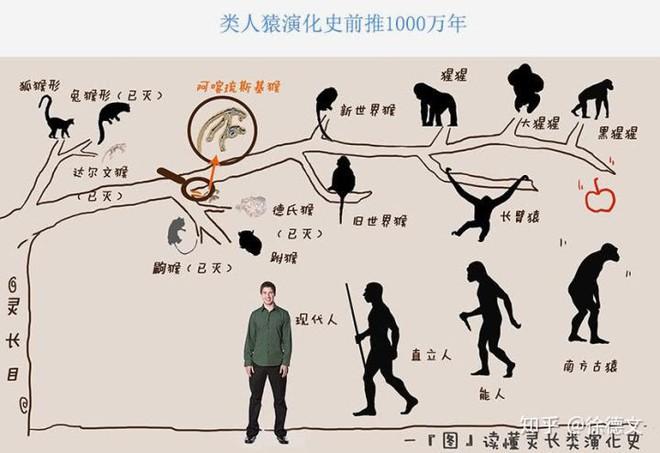 Nếu loài người bị diệt vong, liệu tinh tinh có tiếp tục tiến hóa để trở thành loài người hay không? - Ảnh 3.