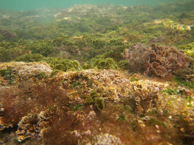 Lò phản ứng sinh học làm từ tảo chỉ cao 2 mét thôi cũng có thể biến đổi cacbon tốt tương đương 4.000m2 rừng - Ảnh 2.