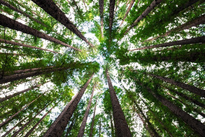 Lò phản ứng sinh học làm từ tảo chỉ cao 2 mét thôi cũng có thể biến đổi cacbon tốt tương đương 4.000m2 rừng - Ảnh 3.