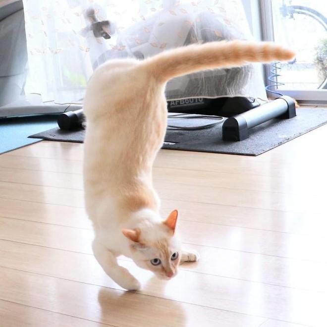Internet lại rần rần vì boss mèo chuyên tạo dáng chụp ảnh đậm chất hiphop siêu ngầu, mà toàn là động tác khó chứ đừng đùa - Ảnh 12.