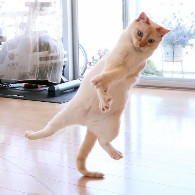 Internet lại rần rần vì boss mèo chuyên tạo dáng chụp ảnh đậm chất hiphop siêu ngầu, mà toàn là động tác khó chứ đừng đùa - Ảnh 10.
