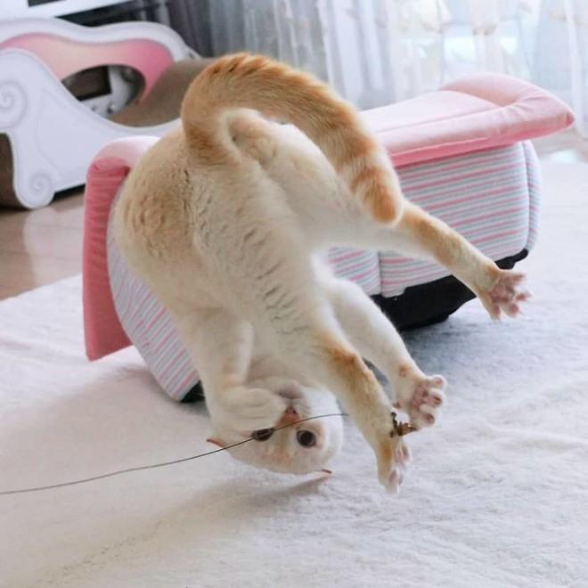 Internet lại rần rần vì boss mèo chuyên tạo dáng chụp ảnh đậm chất hiphop siêu ngầu, mà toàn là động tác khó chứ đừng đùa - Ảnh 7.