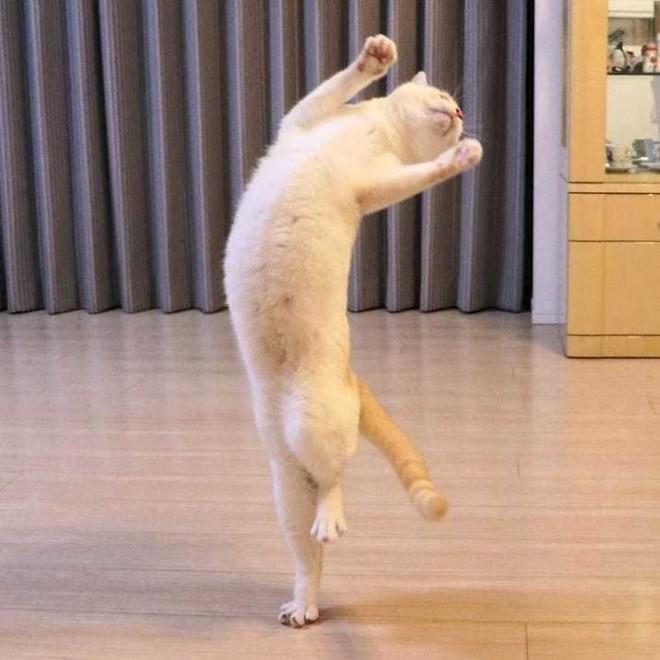 Internet lại rần rần vì boss mèo chuyên tạo dáng chụp ảnh đậm chất hiphop siêu ngầu, mà toàn là động tác khó chứ đừng đùa - Ảnh 9.