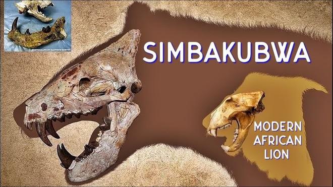 Loài động vật có vú ăn thịt lớn nhất trên đất liền, được mệnh danh là máy xay thịt di động - Ảnh 6.