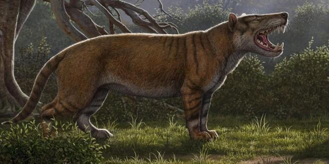 Loài động vật có vú ăn thịt lớn nhất trên đất liền, được mệnh danh là máy xay thịt di động - Ảnh 5.