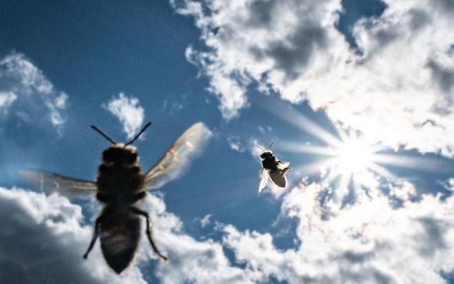 Các nhà khoa học muốn biến loài ong thành đội quân chuyên dò vật liệu nổ và phóng xạ - Ảnh 2.