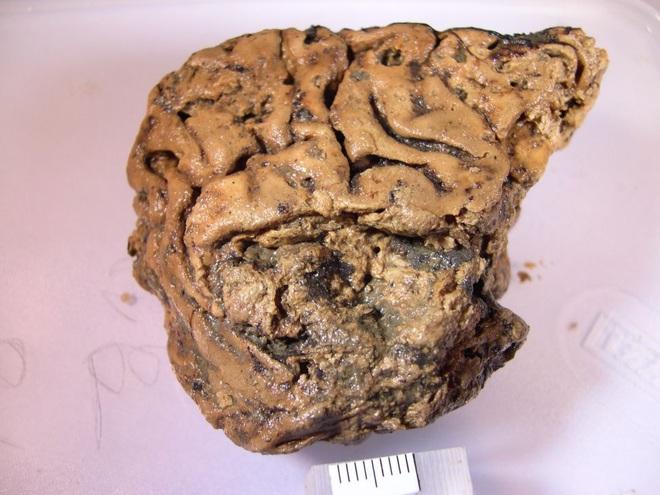 Bí ẩn mảnh não 2.700 năm tuổi, vẫn nguyên vẹn dù cho không hề được tẩm ướp - Ảnh 1.