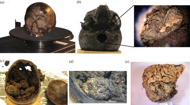 Bí ẩn mảnh não 2.700 năm tuổi, vẫn nguyên vẹn dù cho không hề được tẩm ướp - Ảnh 2.