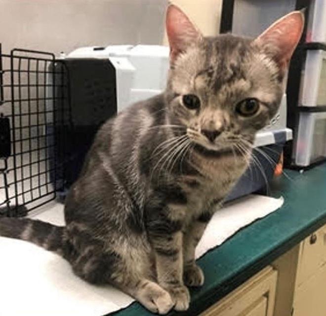 Không chỉ riêng con người, mèo cũng bị mắc hội chứng Down - Ảnh 3.